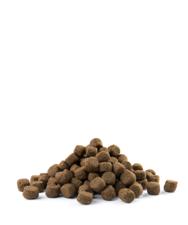 VERSELE-LAGA Opti Life Adult Skin Care Medium & Maxi 12,5 kg - karma dla dorosłych psów ras średnich i dużych z wrażliwą skórą